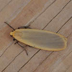 Buff Footman
